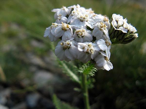 ZainoinSpalla - La natura in montagna - Fiori - estate