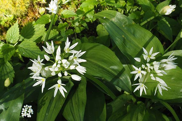 Zainoinspalla la natura in montagna fiori primavera for Pianta mediterranea con fiori rossi bianchi e gialli