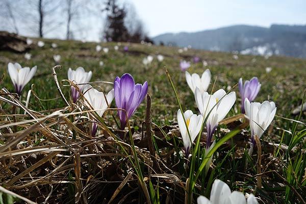 Fiori Bianchi Montagna.Zainoinspalla La Natura In Montagna Fiori
